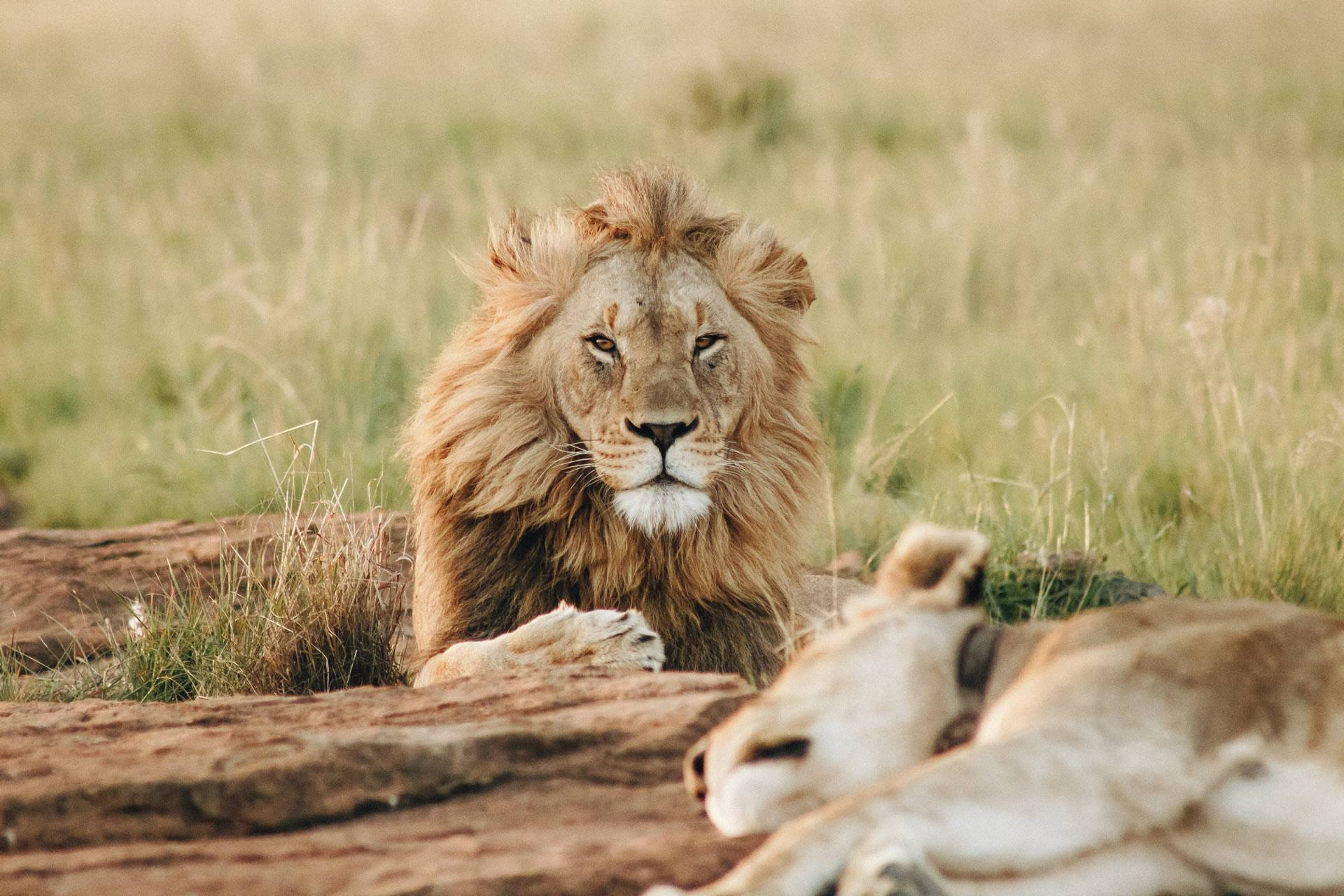 Explore our Featured African Safari Holidays