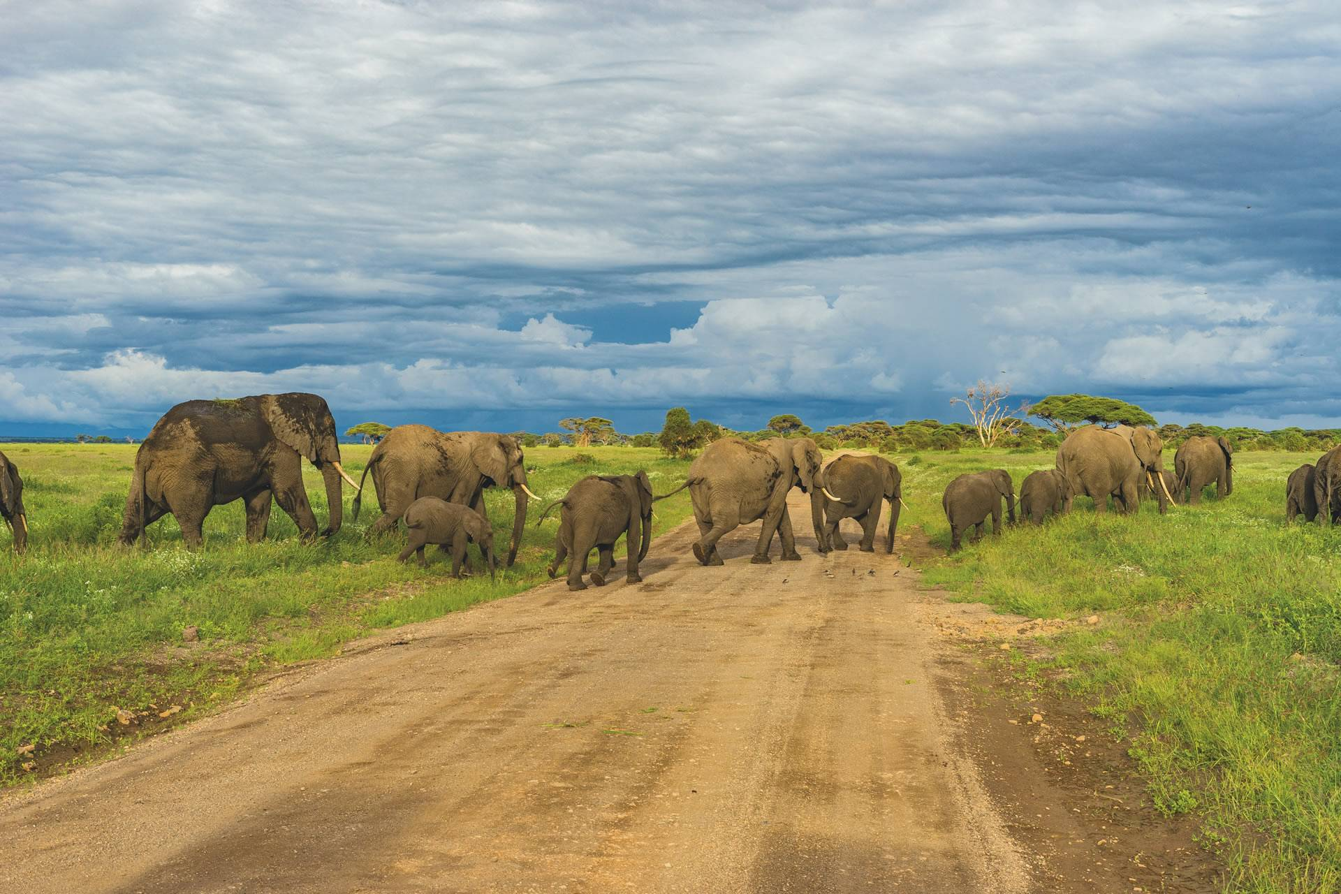 Holiday tour packages in Tanzania
