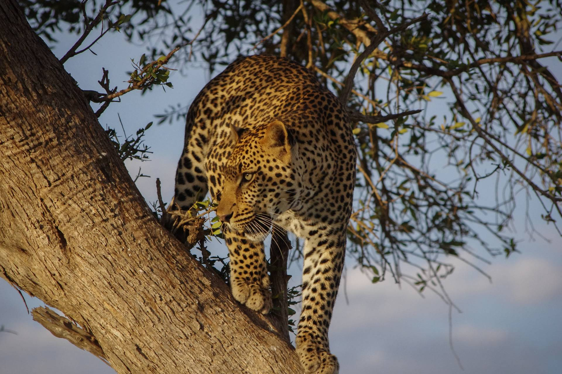 Complete Tanzania Holiday Package