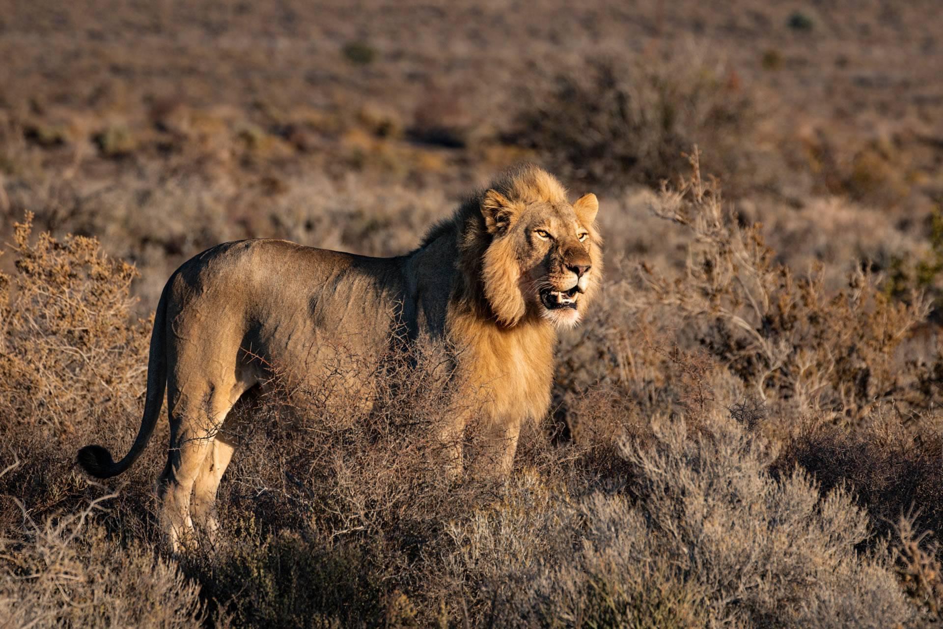 Tanzania Budget Safari Tour