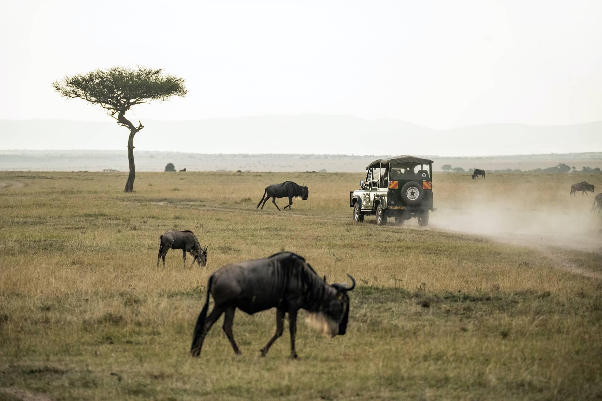 3 Days Tanzania Luxury Safari