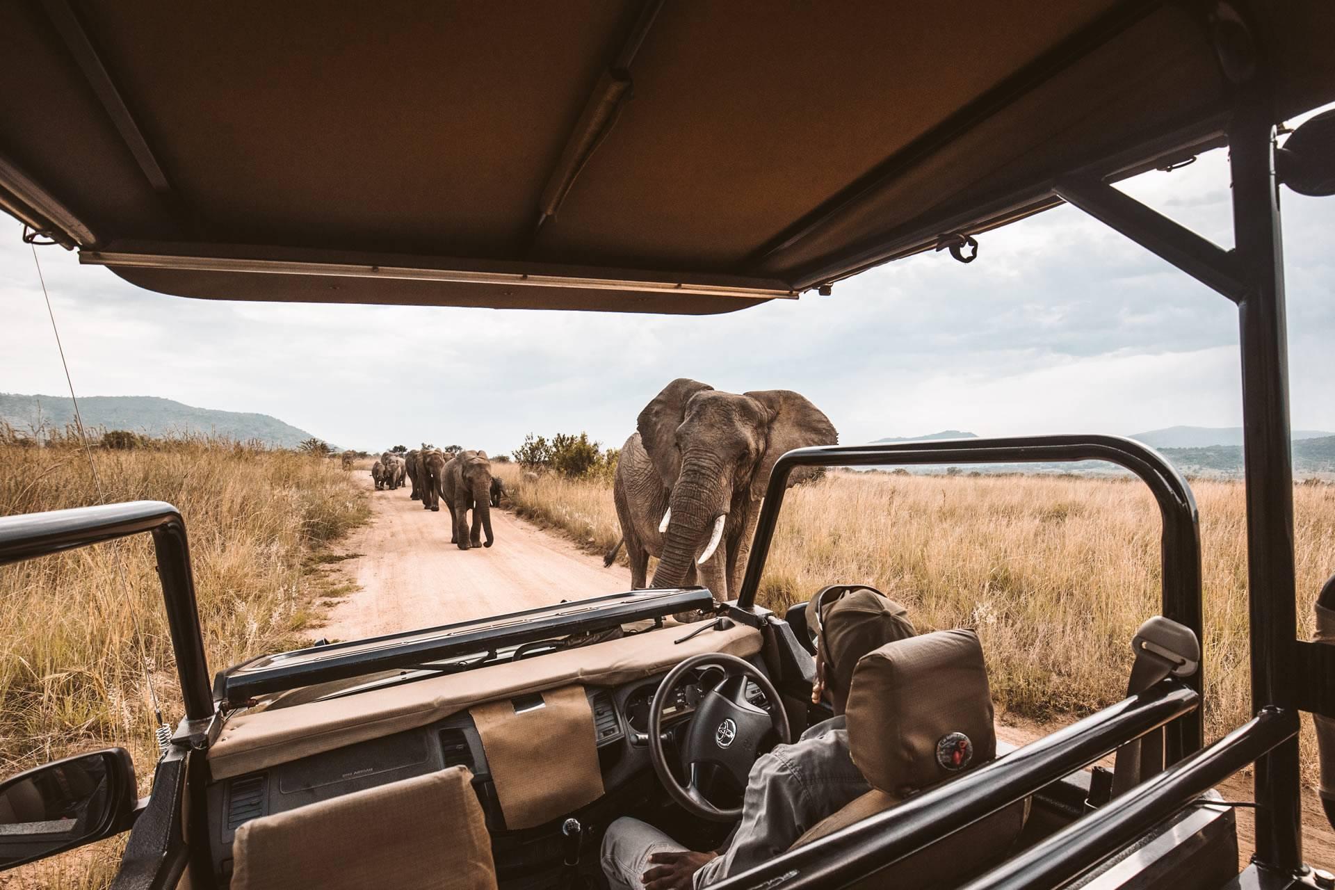 Family Safari Holiday