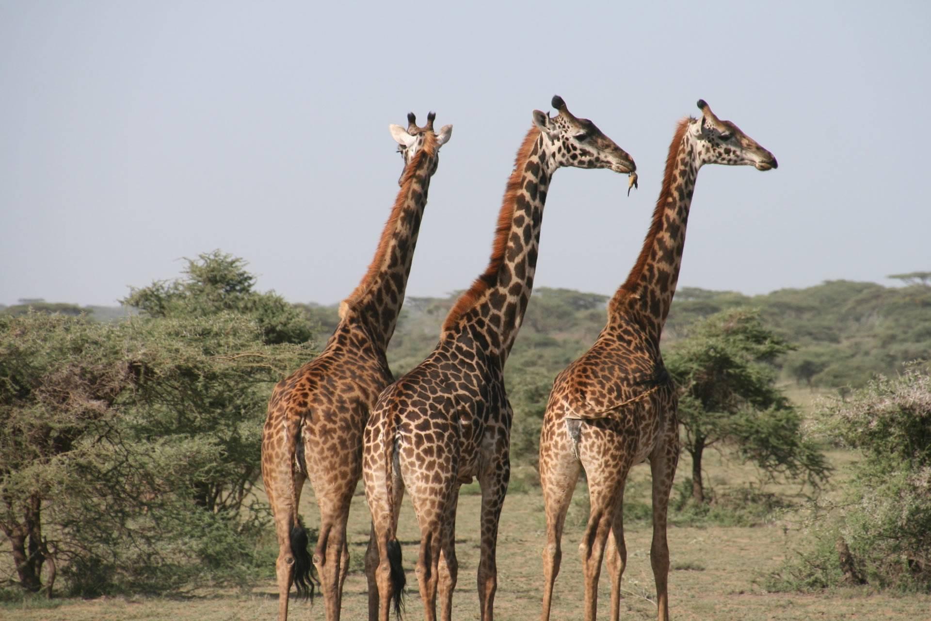 Tanzania Classic Lodge Safari