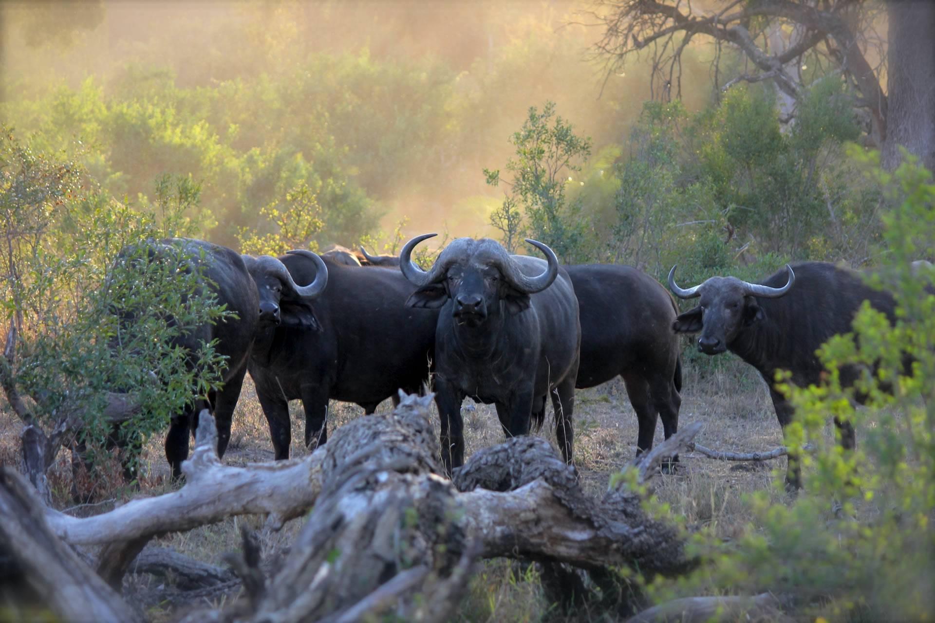 The Best Luxury African Safari
