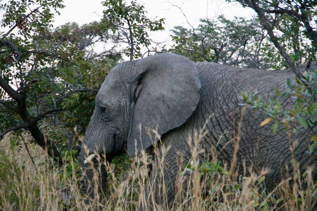 the Best African Holiday Packages