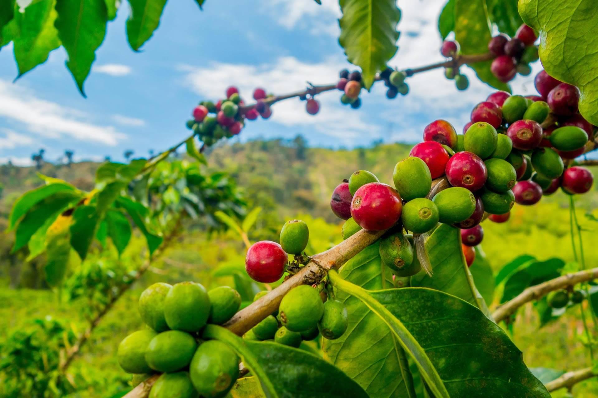 Marangu Village and Coffee Day Tour