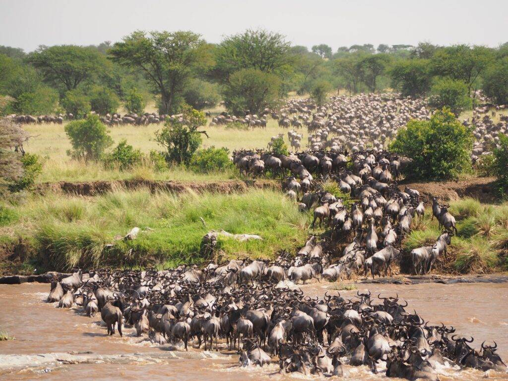 Serengeti Migration Tours