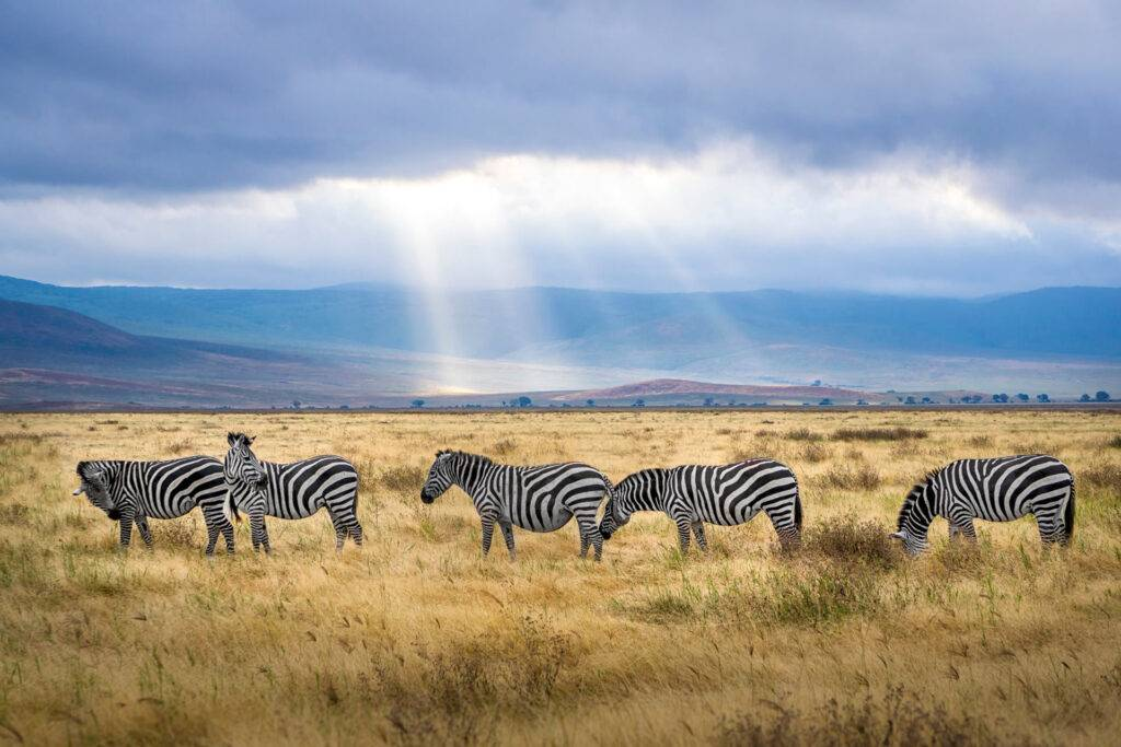Best Tanzania Safari Packages