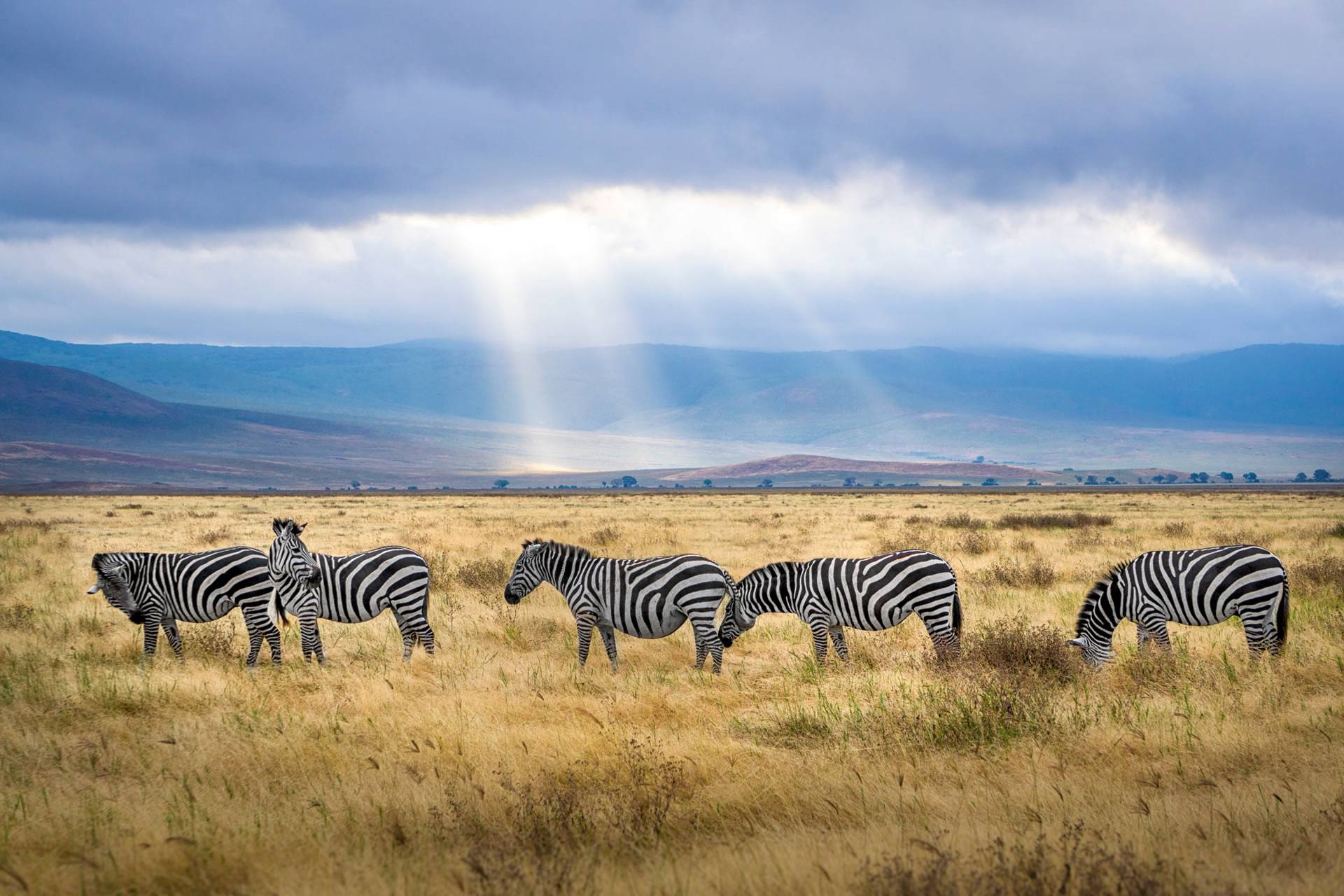 Best Tanzania Safari Packages