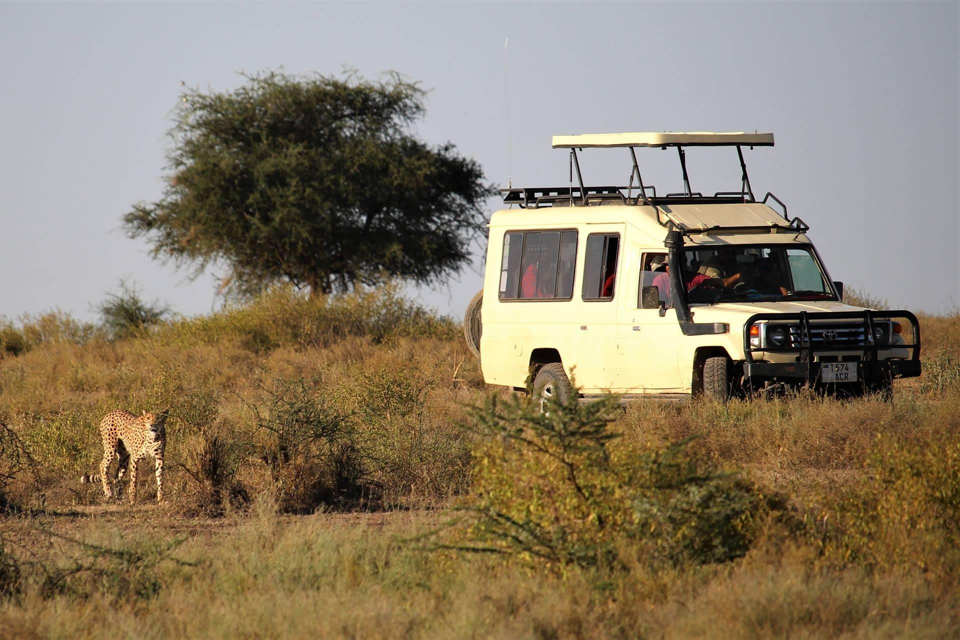Mid-Range Safari in Tanzania