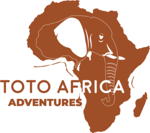 Tanzania Safari and Kilimanjaro Climbing