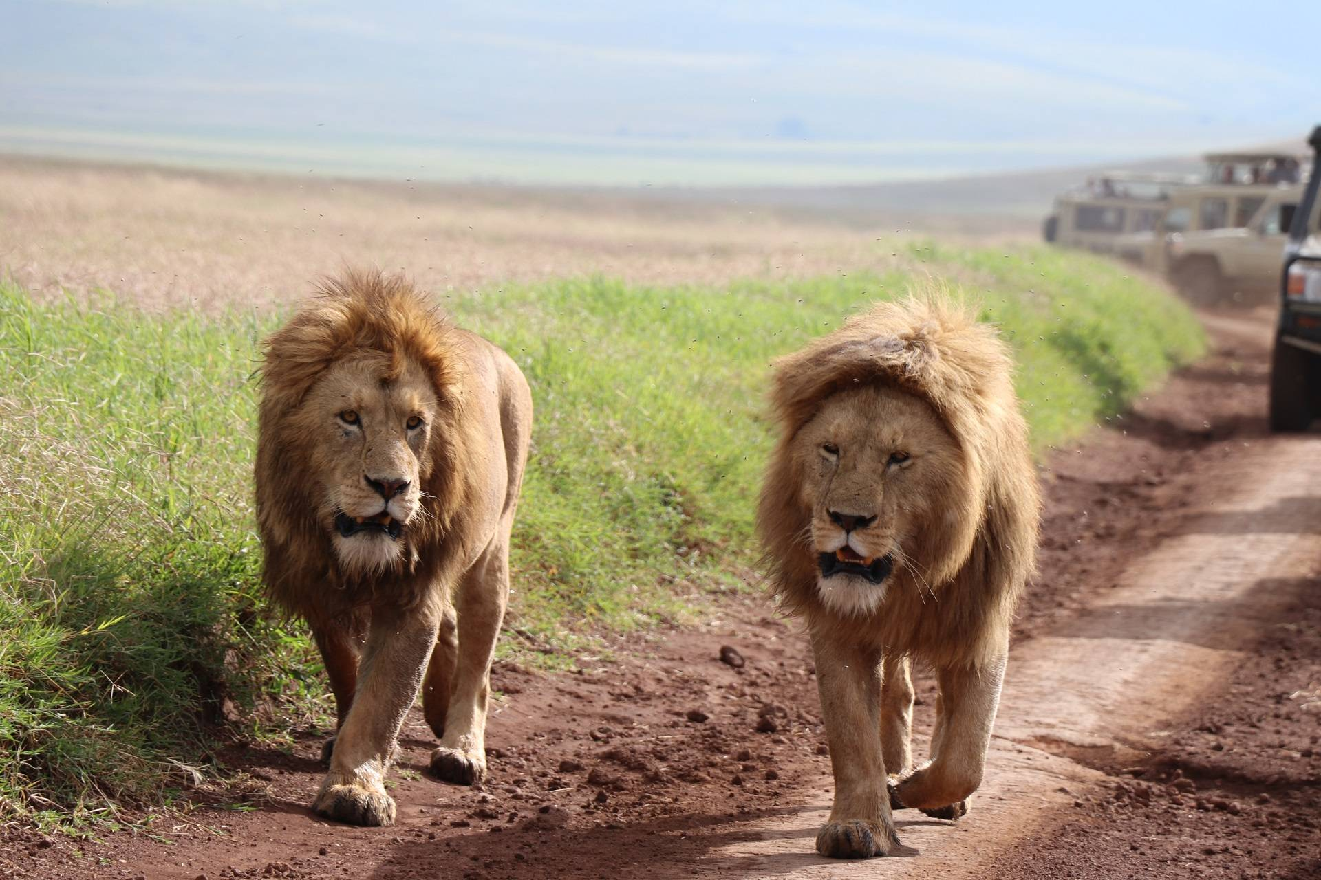 Affordable Safari Tours