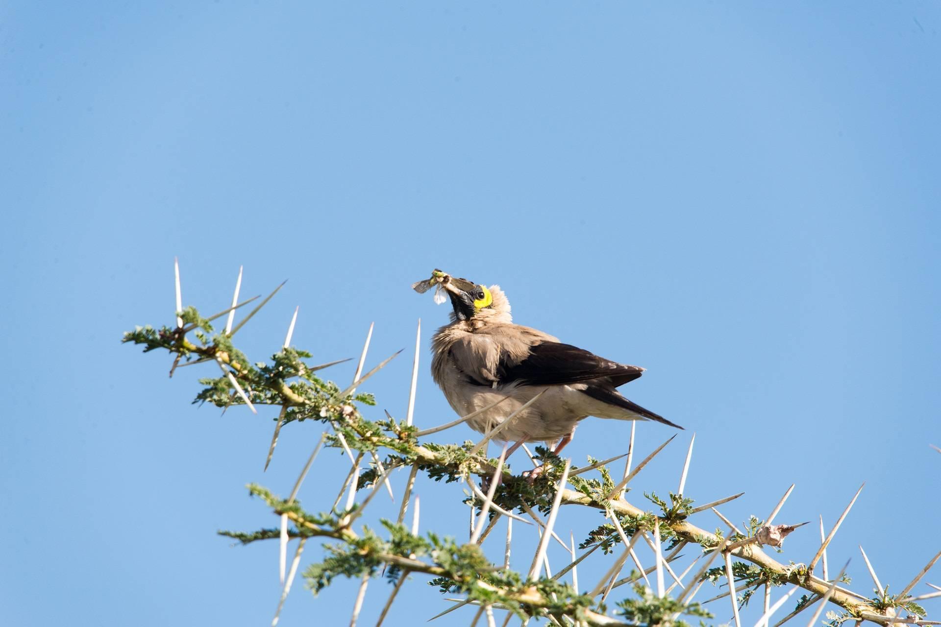Tanzania Bird Watching Safari