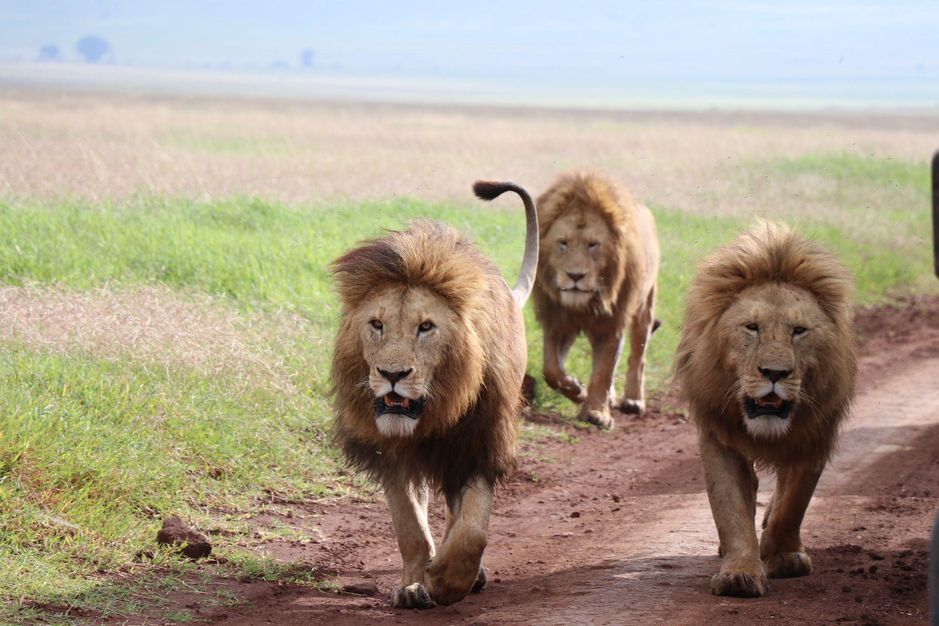 5 Days Big Five Mid-Range Safari