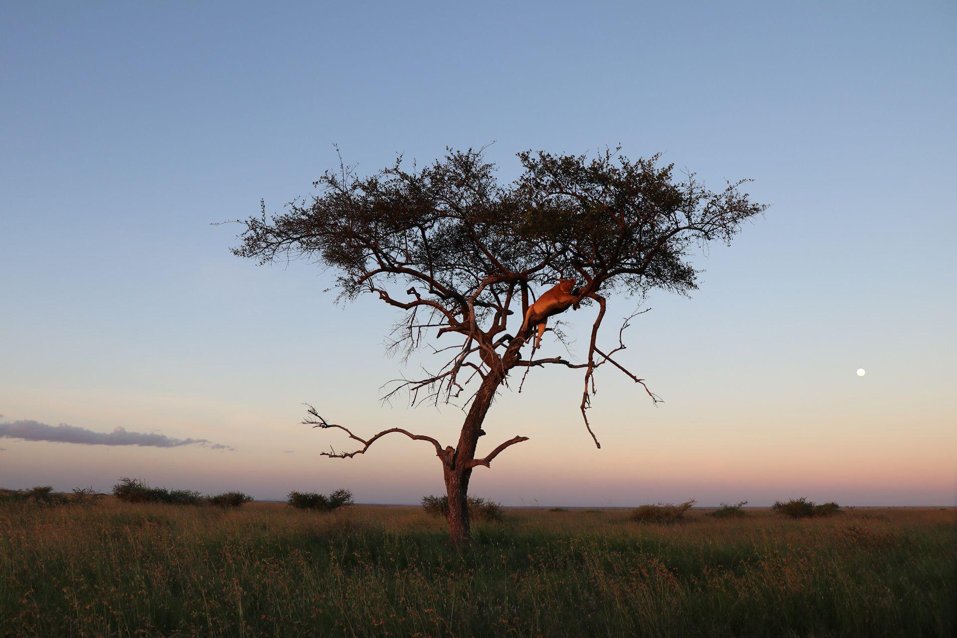 Amazing 7 Days Mid-Range Tanzania Safari