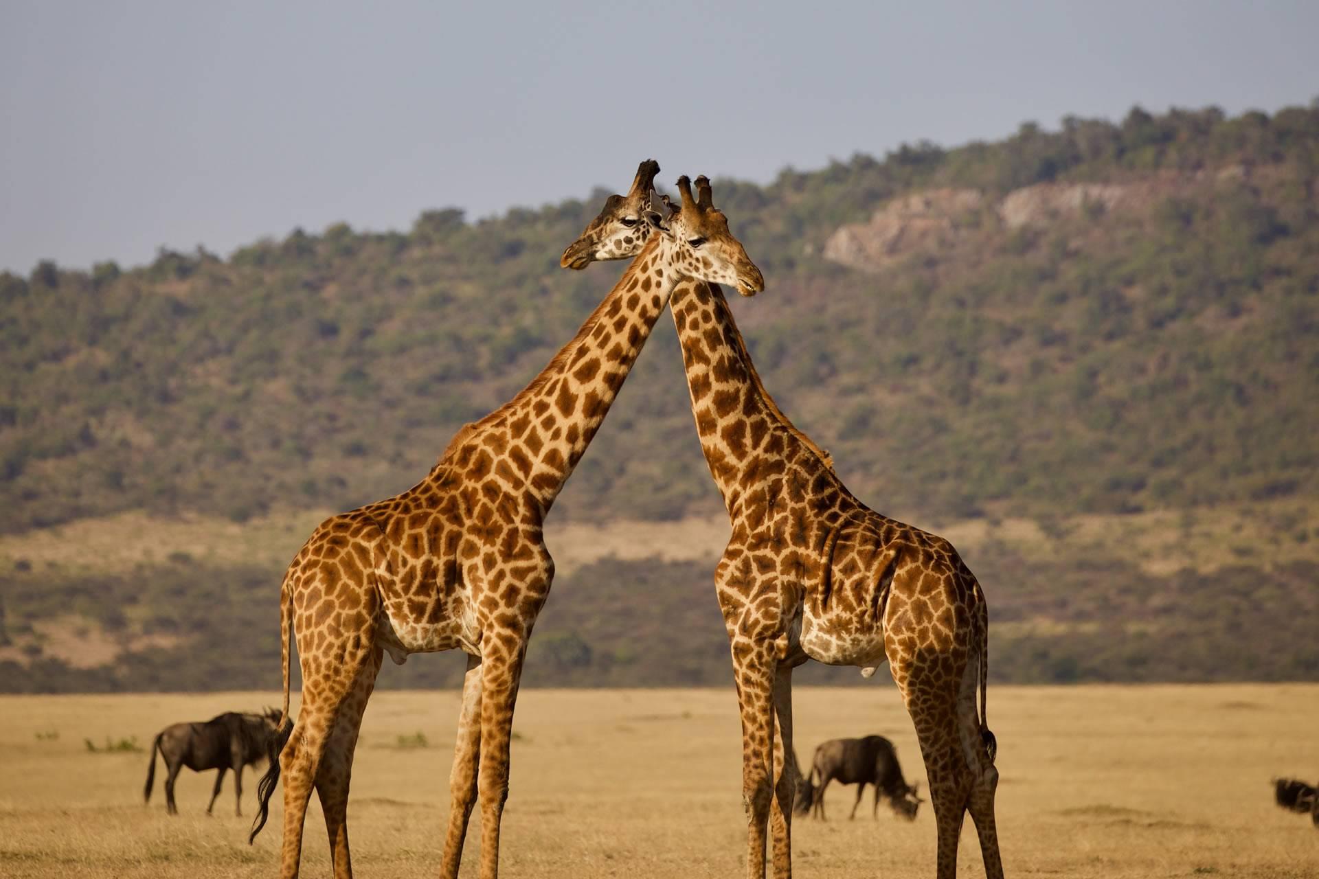 African Luxury Couple Safari