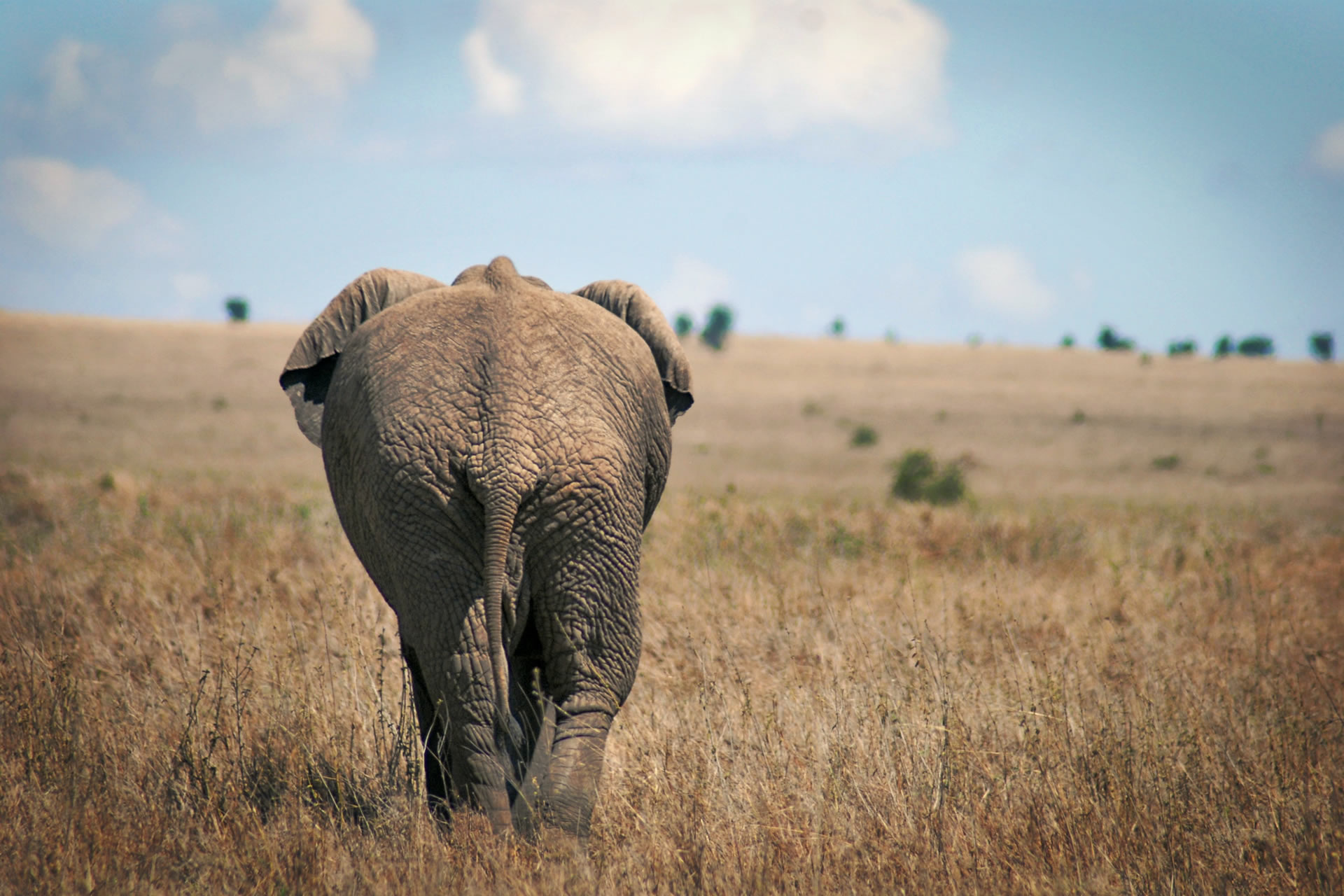 African Family Safari Holiday 2021