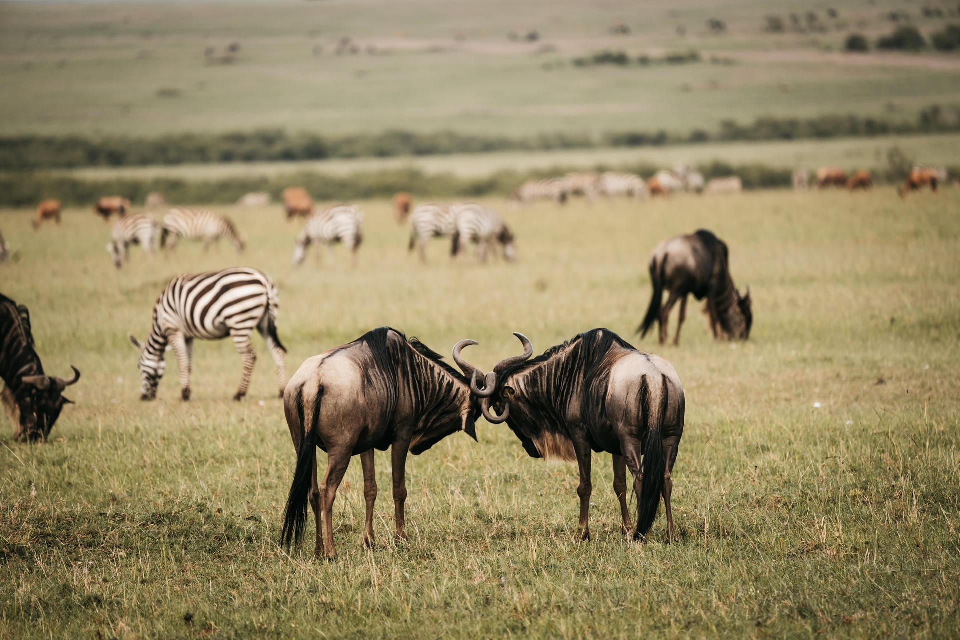 African Safari Tours, Tanzania Luxury Safari, Affordable Tanzania Safaris