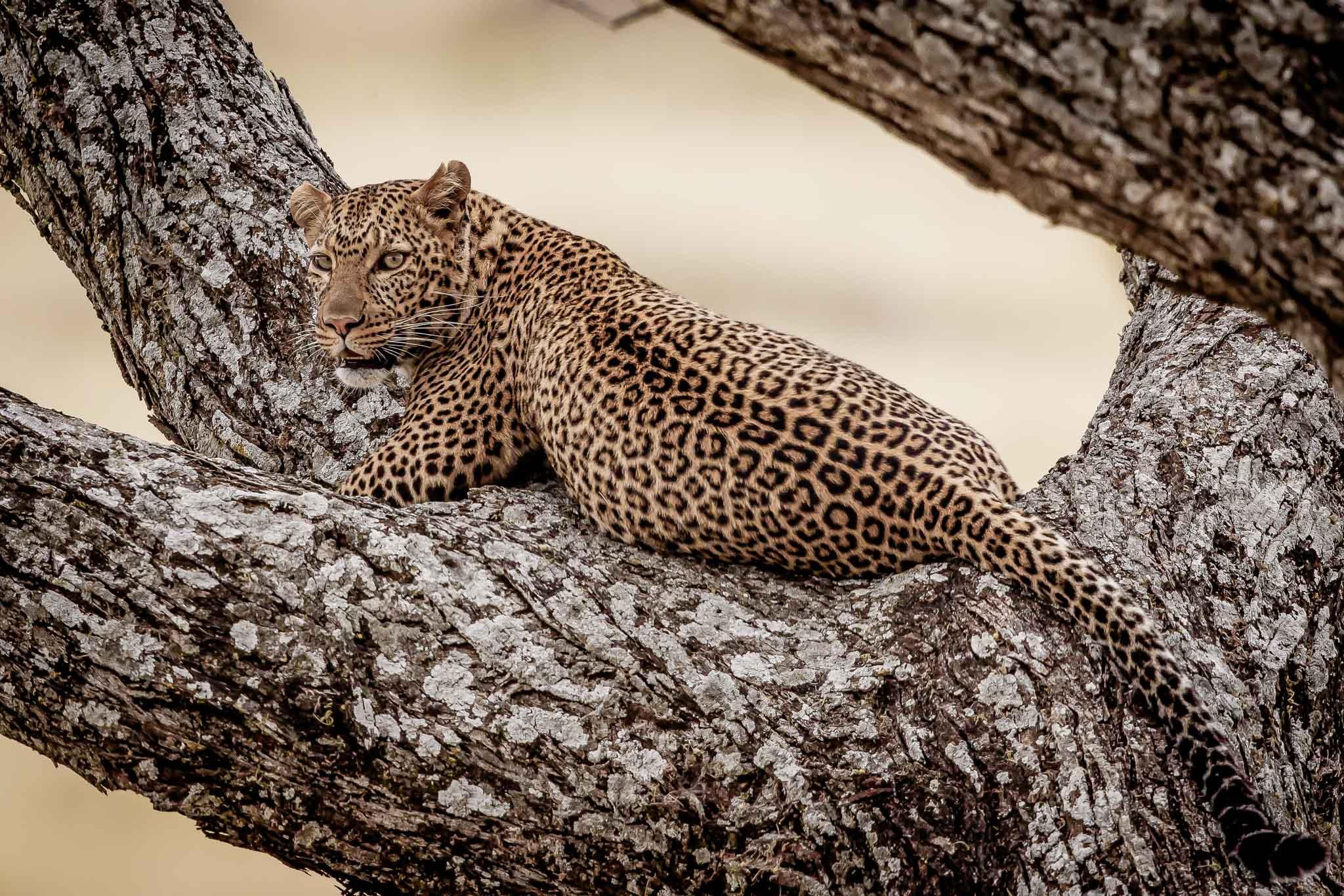 Tanzania Private Luxury Safari